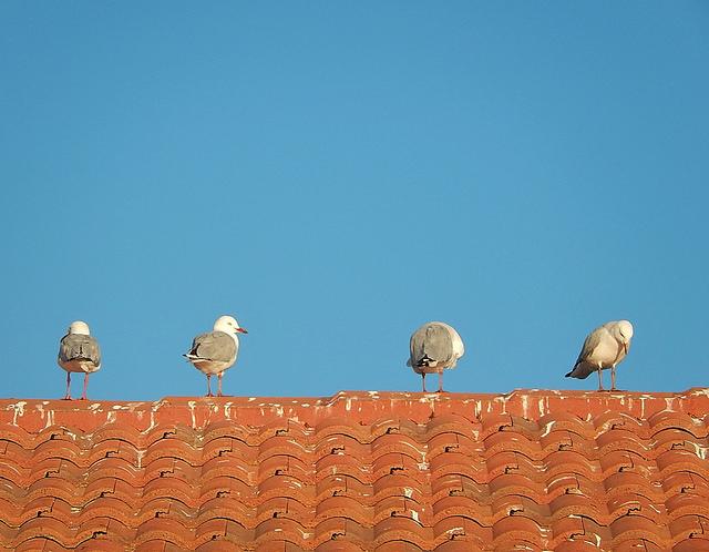 Dry fixing roof tiles vs wet mortar